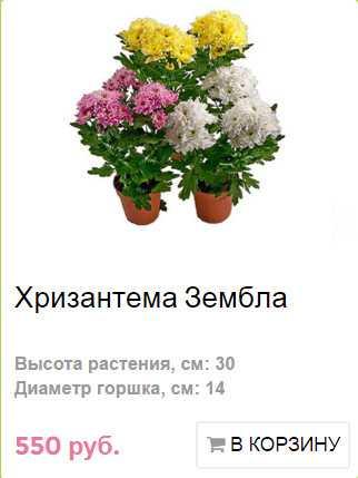 Цветы в подарок бабушке на 80 лет