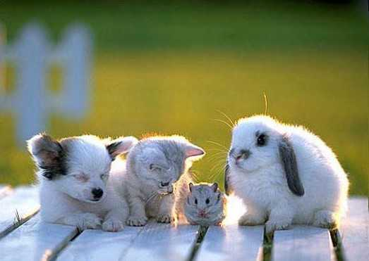 Детёныши животных