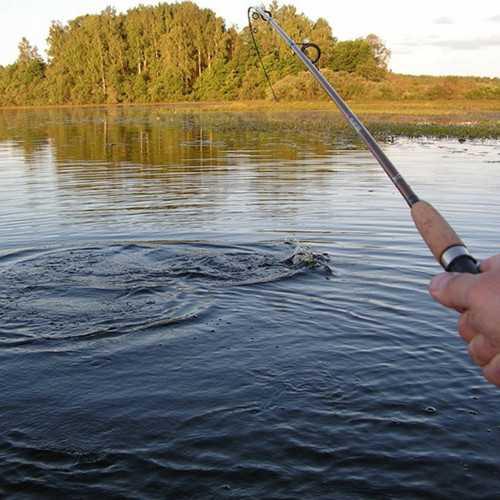 Орловские рыбаки выиграли серебро Кубка Курской области