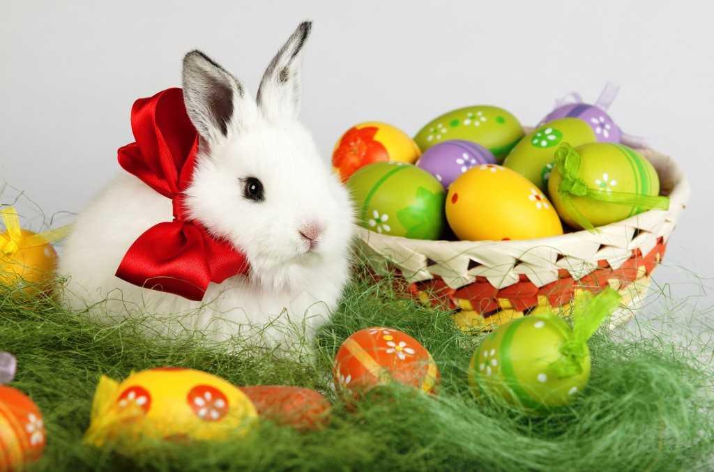 Кролик и яйца