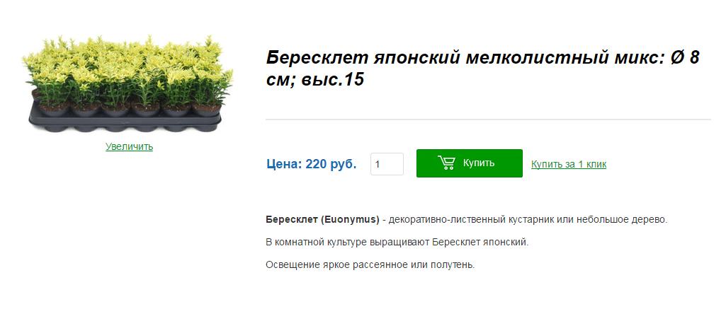 Растение мини