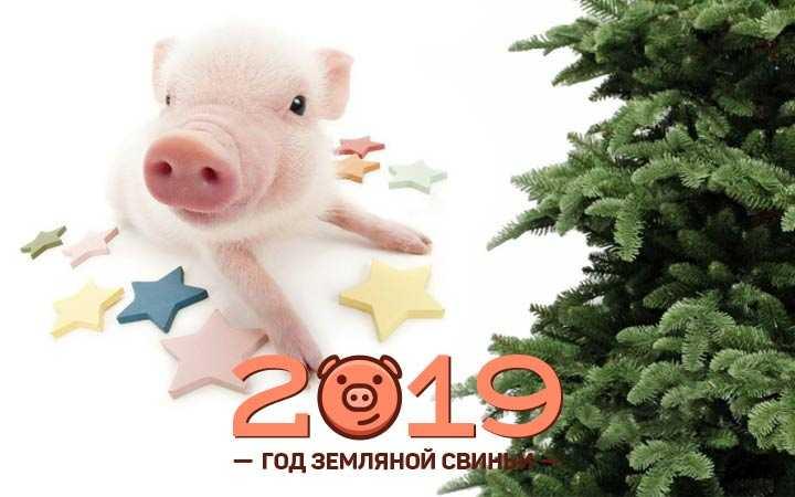 Год земляной Свиньи
