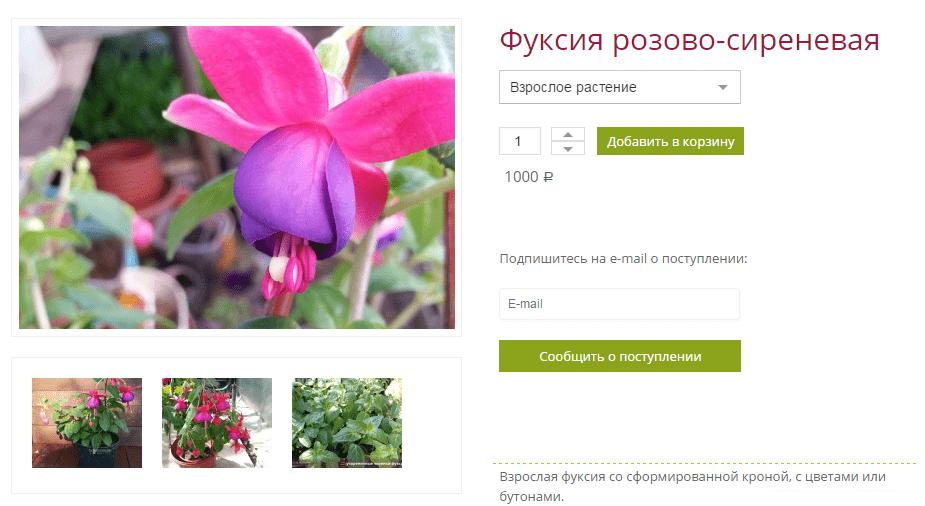 Фуксия