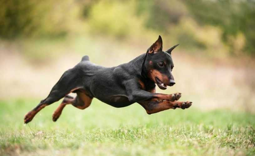 Щенок в подарок — 13 идеальных пород собак для вашего ребенка